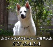 犬舎バナー
